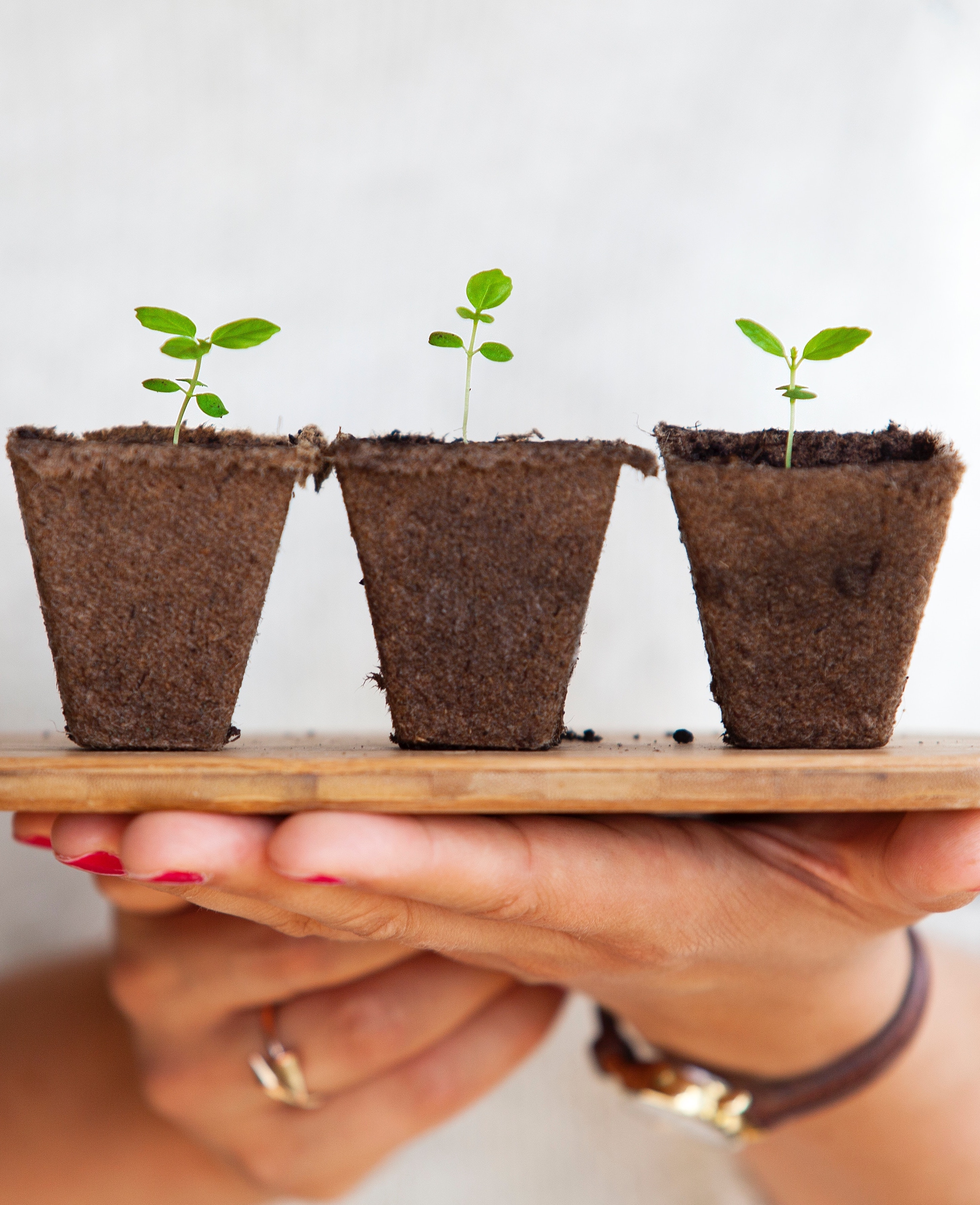 growing plants, environment and sustinability